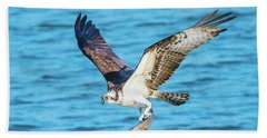 Osprey Fishing Success Beach Sheet by Jeff at JSJ Photography