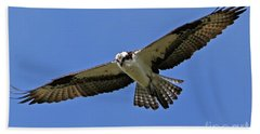 Beach Towel featuring the photograph Osprey Glide by Sue Harper