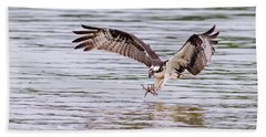 Beach Towel featuring the photograph Osprey Going For Breakfast by Lori Coleman