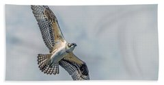 Osprey In Flight Beach Sheet