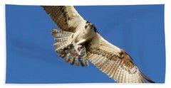 Osprey In Flight Beach Sheet