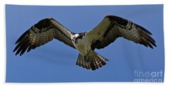 Beach Towel featuring the photograph Osprey In Flight by Sue Harper