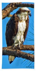 Osprey In Pine Beach Towel
