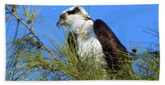 Osprey In Tree Beach Sheet