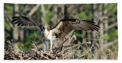 Osprey Nest Against Loblolly Beach Towel