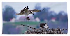 Osprey Nest Building Beach Towel