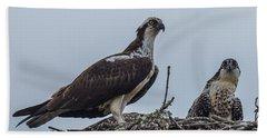 Osprey On A Nest Beach Towel by Paul Freidlund