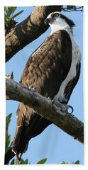 Osprey - Perched Beach Towel by Jerry Battle
