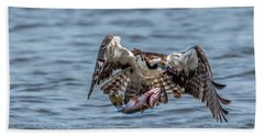 Osprey With Catch 9108 Beach Towel