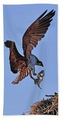 Osprey With Fresh Catch Beach Towel