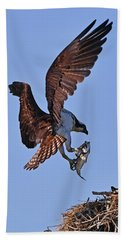 Osprey With Fresh Catch Beach Sheet
