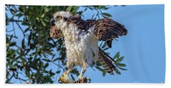 Osprey With Meal Beach Sheet