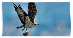 Osprey With Rainbow Bass 2 Beach Sheet