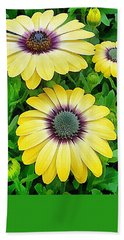 Osteospermum Serenity Blue Beach Sheet