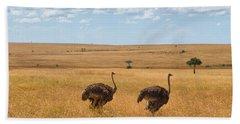 Ostrich Beach Sheet