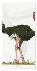 Ostrich Bird Beach Towel by Juan Bosco