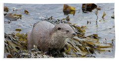 Otter On Seaweed Beach Towel