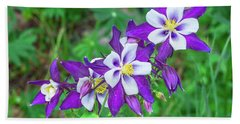 Our Gorgeous State Flower, Colorado Columbine  Beach Towel