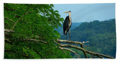 Beach Towel featuring the photograph Out On A Limb by Donald C Morgan