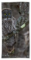 Over There- Great Gray Owl Beach Towel