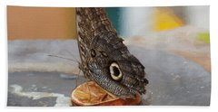 Beach Towel featuring the photograph Owl Butterfly-1 by Paul Gulliver