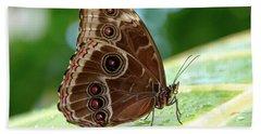 Owl Butterfly Beach Sheet