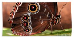 Owl Butterfly Portrait Beach Towel