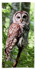 Owl In The Forest Beach Towel by Peggy Collins