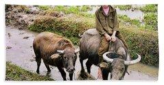 Oxen Day Off.cambodia Beach Towel