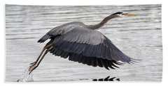 Beach Towel featuring the photograph Pacific Great Blue Heron On Lift Off by Sue Harper