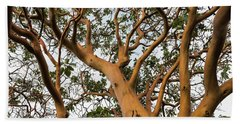 Pacific Madrone Trees Beach Towel