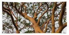 Pacific Madrone Trees Beach Sheet
