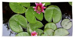 Pacific Tree Frog On Water Lily Flower Aerial View Beach Towel
