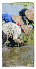 Paddy Field 2 Beach Towel by Werner Padarin