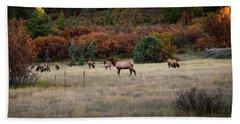 Beach Towel featuring the photograph Pagosa Autumn Elk by Jason Coward