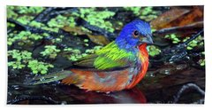 Beach Sheet featuring the photograph Painted Bunting After Bath by Larry Nieland