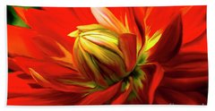 Painted Dahlia In Full Bloom Beach Towel