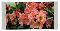 Painterly Rhododendron Grouping Beach Towel by Chris Anderson