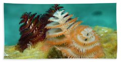 Beach Towel featuring the photograph Pair Of Christmas Tree Worms by Jean Noren