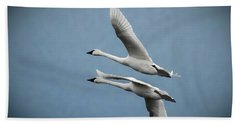 Pair Of Tundra Swan Beach Towel