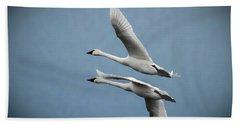 Pair Of Tundra Swan Beach Sheet