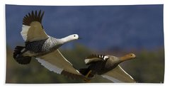 Pair Of Upland Geese Beach Towel