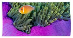 Palau, Anemone Fish Beach Towel