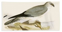 Pale Chested Harrier Beach Towel by English School