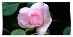 Pale Pink Rose Beach Towel