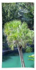 Beach Towel featuring the photograph Palm Tree Blue Pond by Raphael Lopez