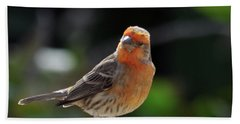 Papaya Bird Beach Sheet