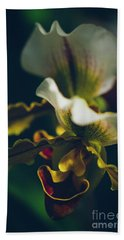 Beach Towel featuring the photograph Paphiopedilum Villosum Orchid Lady Slipper by Sharon Mau