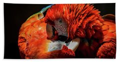 Parrots Beach Towel by Mitch Shindelbower