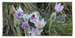 Beach Towel featuring the photograph Pasqueflower by Michal Boubin